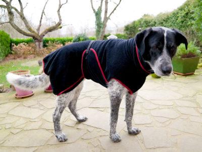 Hundebademantel an einem Hund