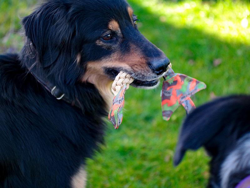 Major Dog Fischgräte, Tüv zertifiziertes Hundespielzeug zum zerren