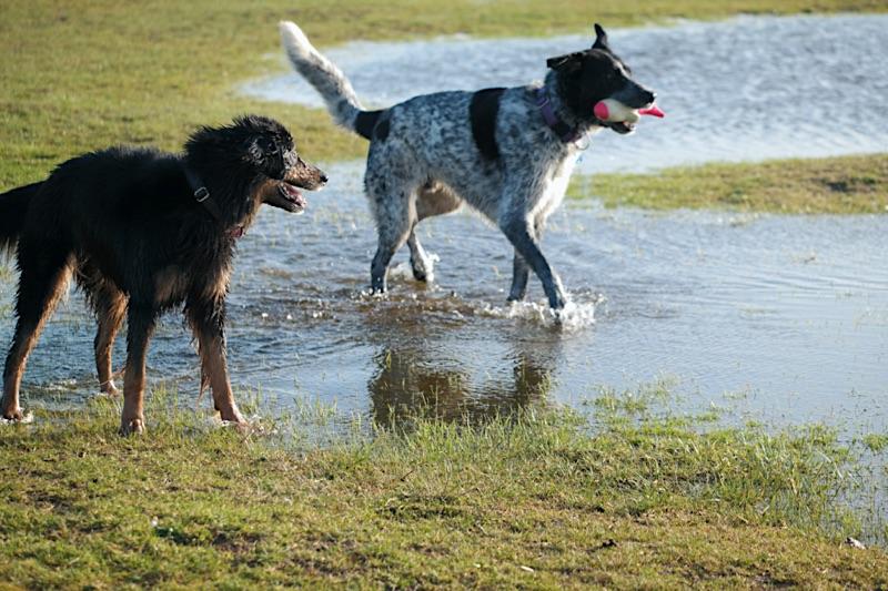 Zwei Hunde mit ungiftigem Hundespielzeug fürs Wasser