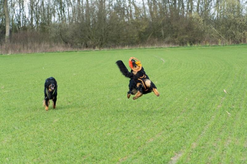 Sehr stabiles Wurf- und Zerrspielzeug für den Hund