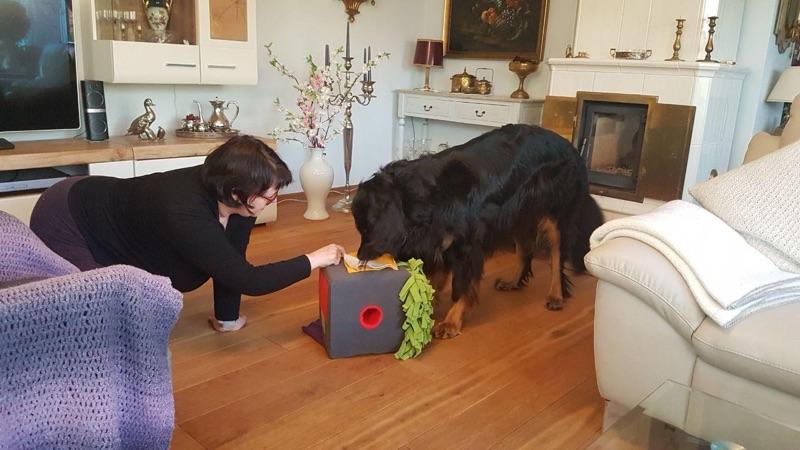 Die SNIFF Box mit einem Hovawart zu Hause