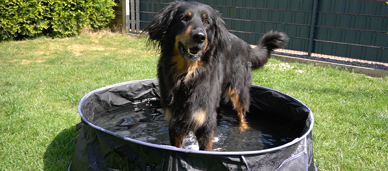 Hovawart im Hunde Pool