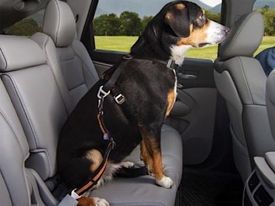 Autosicherheitsgurt für den Hund