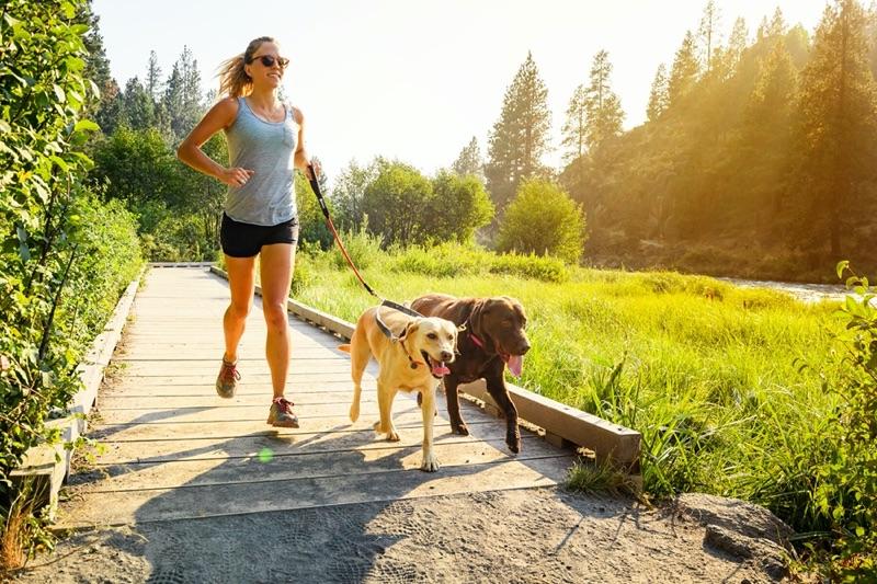 Leinenkoppel für zwei Hunde beim Joggen