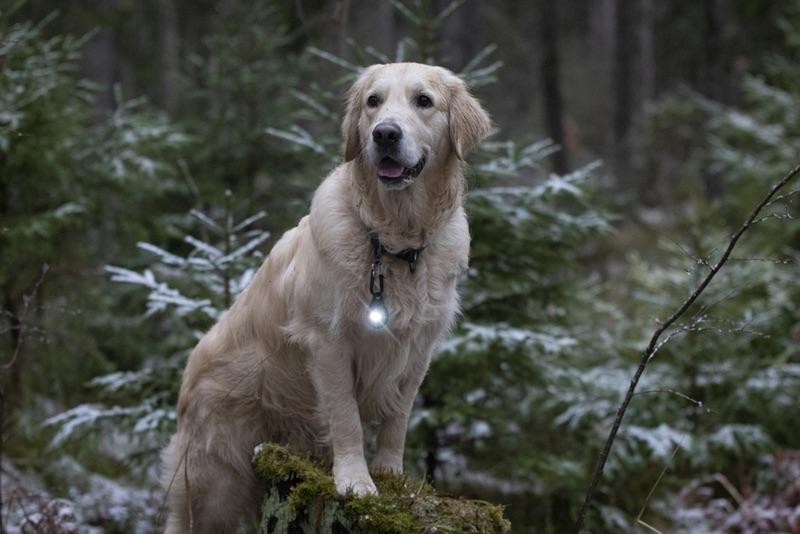 Hund mit Doglight
