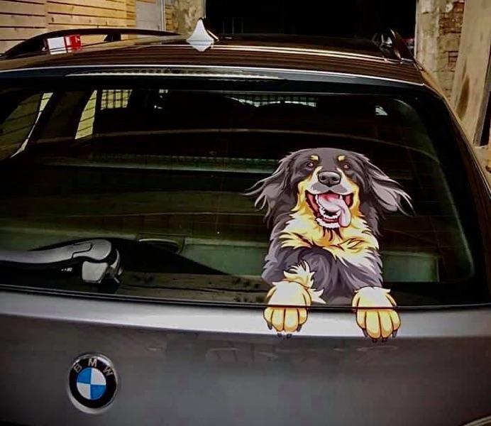 Hovawart Aufkleber auf einem BMW