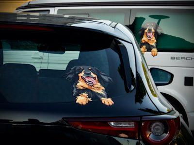 Hovawart Aufkleber auf zwei Autos