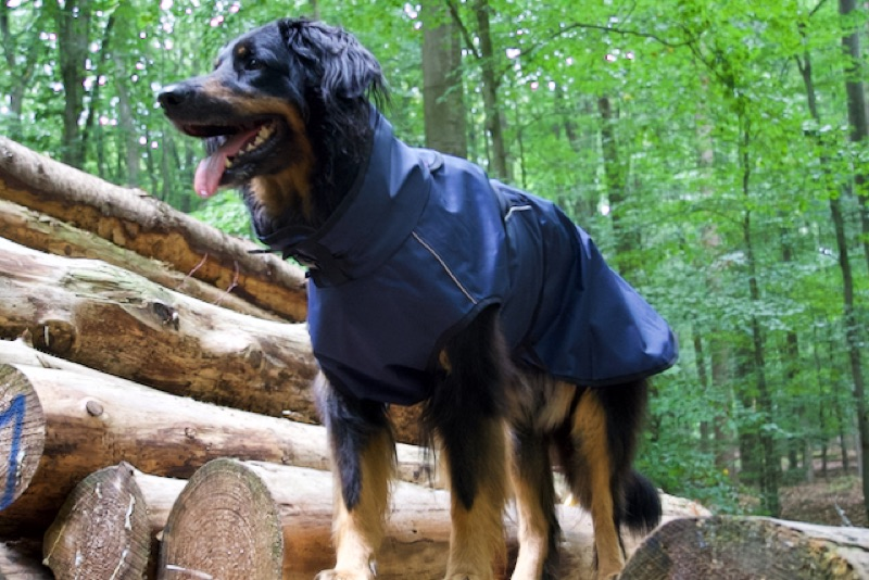 Regenmantel für grosse Hunde wie den Hovawart hier im Wald