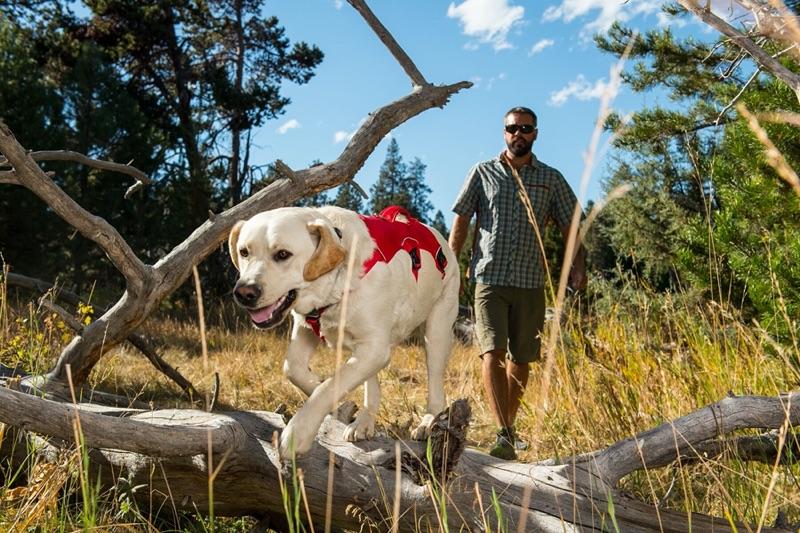 Webmaster Geschirr für Große Hunde auch als Panikgeschirr zu verwenden