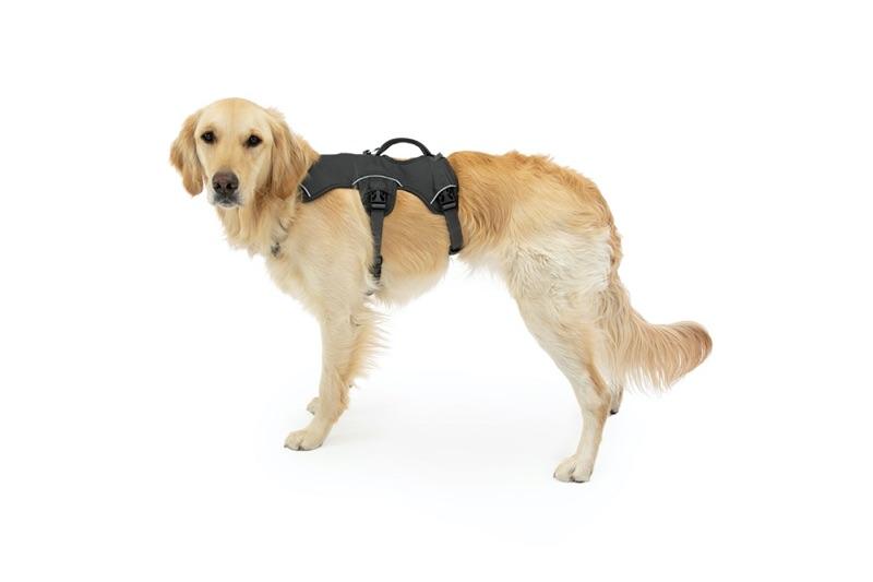 Webmaster Geschirr für Große Hunde
