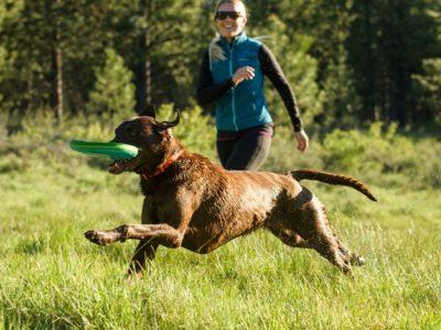 Hundefrisbee für weite Würfe