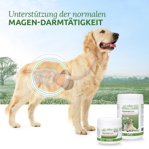 Ulmenrinde Natürliche Unterstützung für den Magen-Darm-Trakt