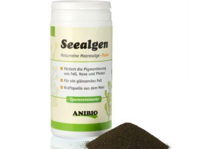 Seealgen fördern die Pigmentierung der Nase, der Augen und des Fells, sie wirken sich förderlich auf die Verdauung aus (bestmögliche Futterverwertung)