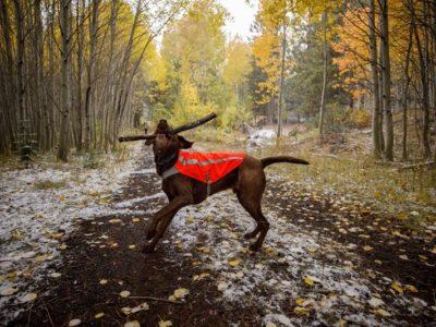 Warnweste für grosse Hunde, wie den Hovawart