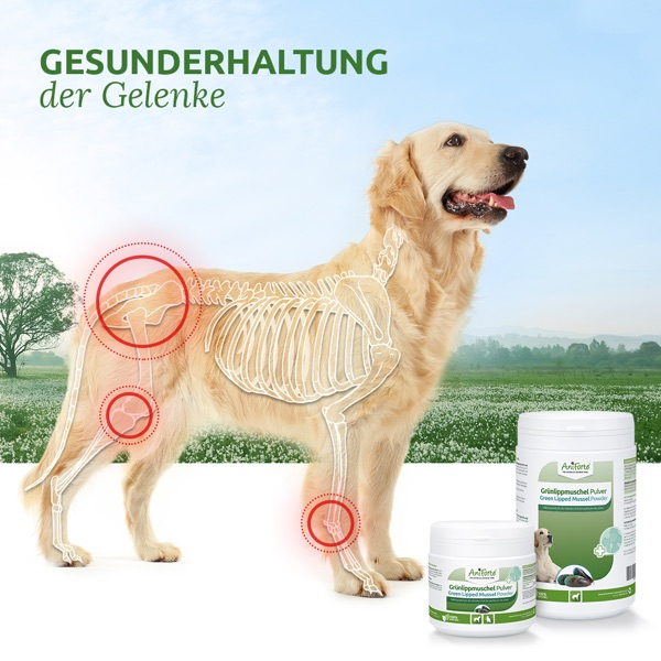 Grünlippmuschelpulver für den Hund ist eine natürliche Gelenkenahrung. Das Pulver in Vollfettqualität trägt zum Erhalt des Gelenkknorpels bei