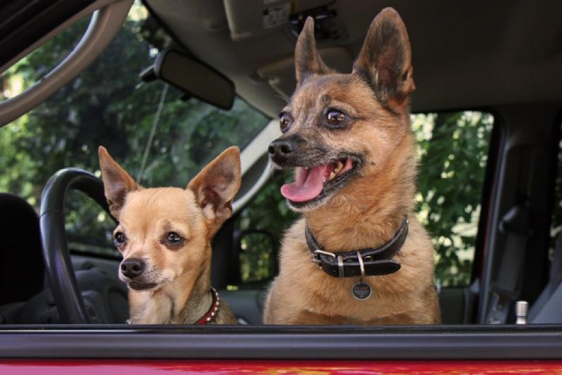 Zwei Hunde mit Spotted QR Marke