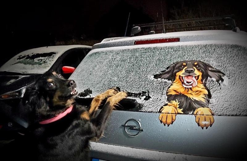 Hovawart Aufkleber auf einem Auto im Winter