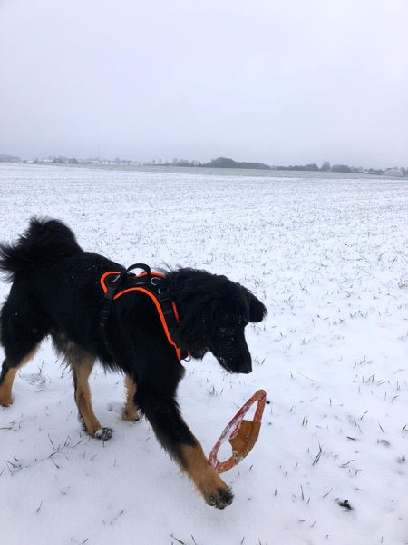 Zudriedener Kunde Hoivawart_Shop mit einem neuem Hundespielzeug