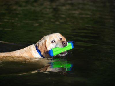 Wasserdummy für grenzenlosen Spass mit deinem Hund