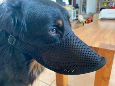 Giftköderschutz für einen großen Hund wie dem Hovawart