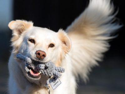 Vom TÜV geprüftes Hundespielzeug für Junghunde, Welpen und Senioren aus reiner Baumwolle, zahnschonend