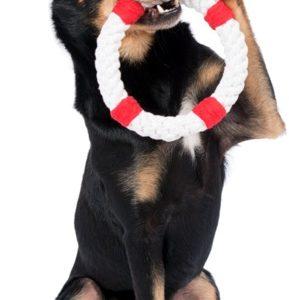 Hund mit Hundespielzeug Rettungsring Rita