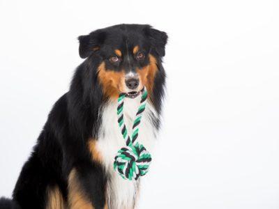 Vom TÜV Süd geprüftes Hundespielzeug aus reiner Baumwolle