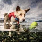 Skipping Stone im Wasser mit einem Hund