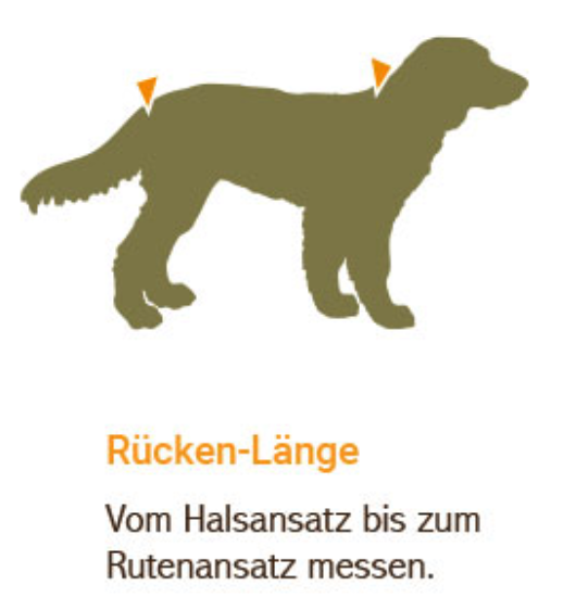 Rückenlänge messen beim Hund für einen Bademantel oder Regenmantel