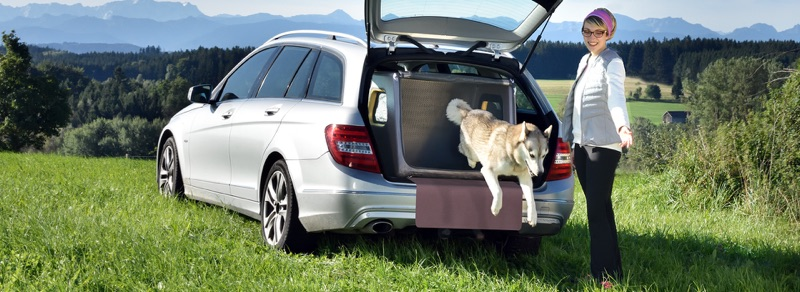 Hund spring aus der Tami Hundebox