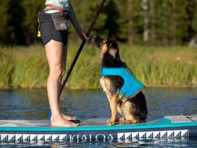 Sicherer Auftrieb für deinen Hund auf dem Wasser