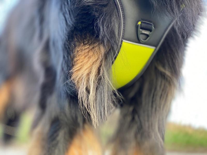 Brustring an einem Axaeco Hundegschirr 4 Season Power