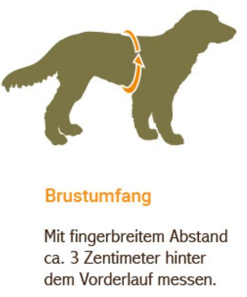 Brustumfang Ermittlung beim Hund