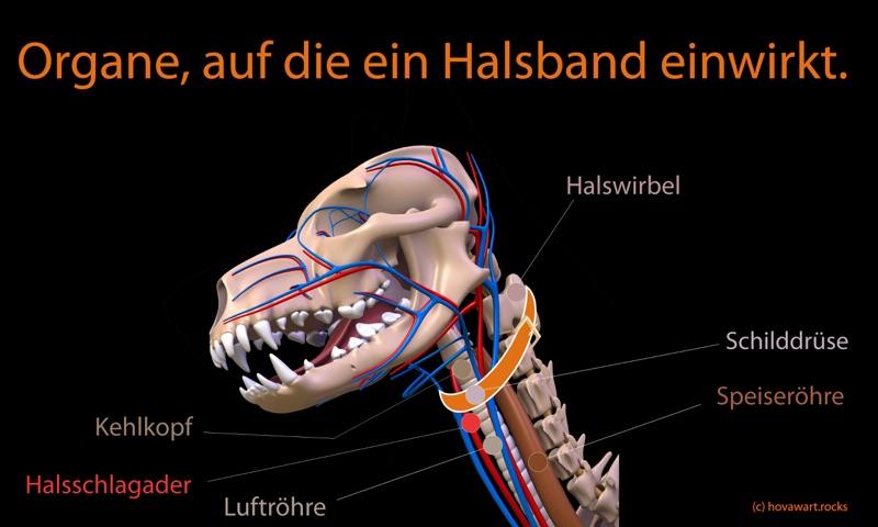 Verletzungen durch Halsband gebrauch beim Hund