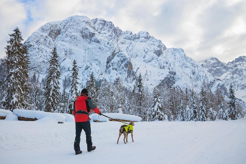 Starke elastische Leine, die sowohl im Alltag als auch bei sportlichen Aktivitäten mit Deinem Hund verwendet werden kann