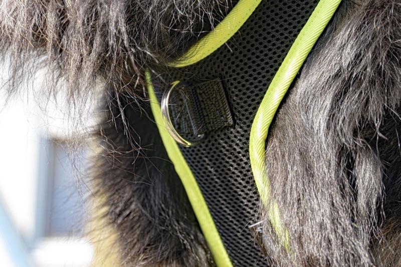 Brustring eines mitwachsenden Hundegeschirres an einem Hovawart