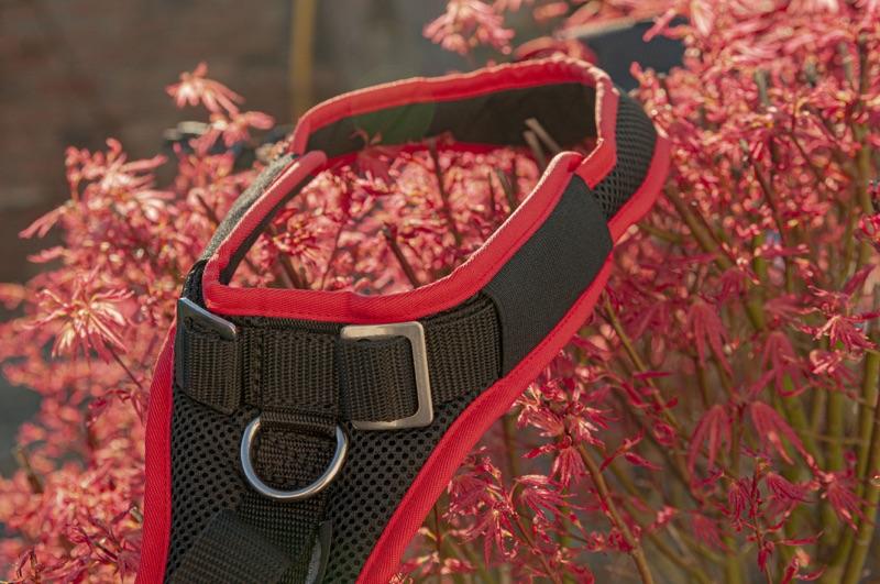 Individuell anpassbares und mitwachsendes Hundesgeschirr, das Vary Support in rot