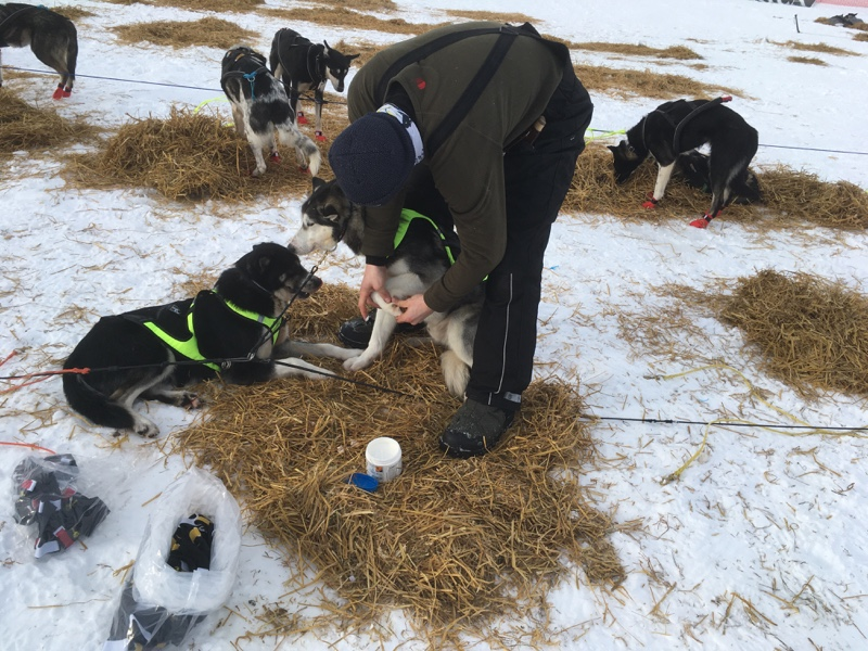 Winter Pfotenschutz aus Skandinavien ohme Wasser