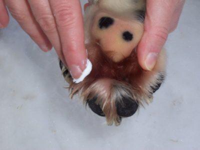 Pfote des Hundes wird mit Creme behandelt