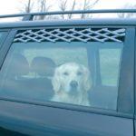 Autofrischluftgitter an einem Auto mit Hund