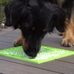 LickiMat mit einem Hund, der Futter davon leckt, dies reduziert Stress