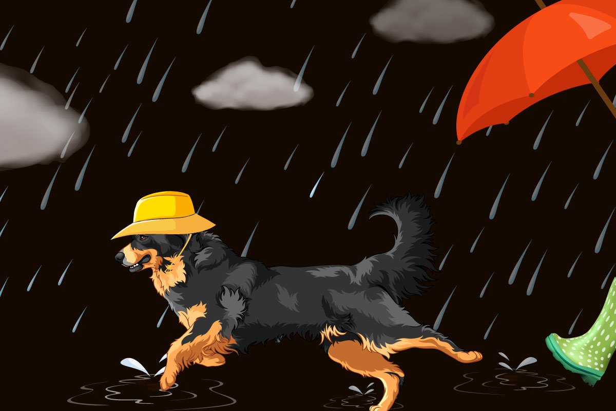 Schlechtwetterschutz für Hunde